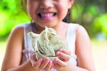 JEN ZE SLIN. Kilo vlaštovčích hnízd vyjde na trhu i na 30 tisíc dolarů a cena se kvůli zájmu neustále zvyšuje.