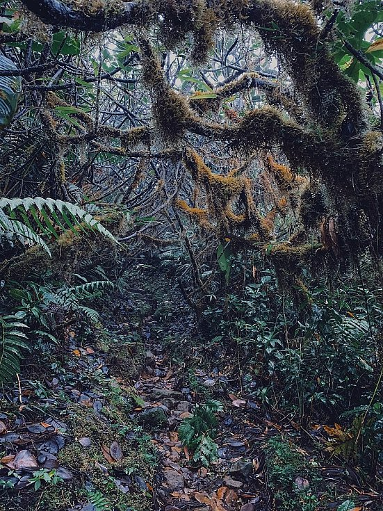 Deštný prales pod úbočími sopky La Soufriere