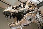 Dinosaurus. Ilustrační snímek