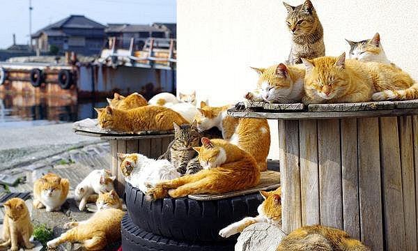 Počet koček až šestkrát převyšuje počet lidských obyvatel