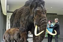 Pozůstatky mamutů