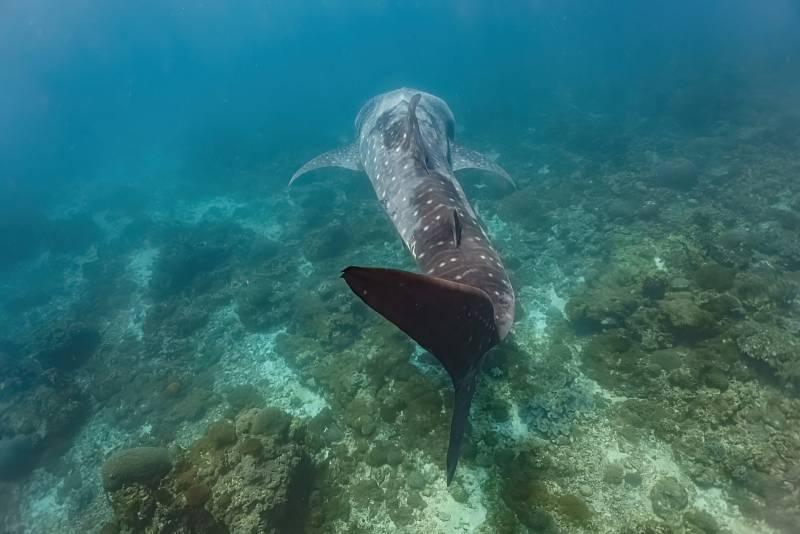 Údaje o poloze žraloků a jejich migračních trasách pak ovlivňují strategie při ochraně jejich stanovišť.