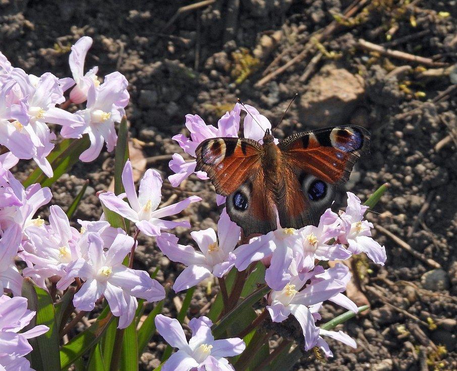 Botanická zahrada Teplice, fotky z expozice