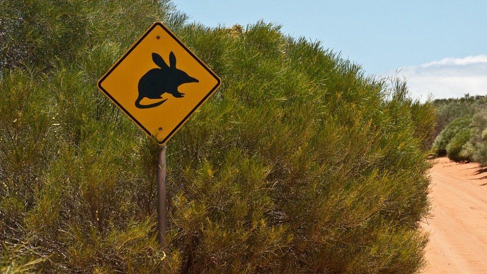K ochraně bandikutů pomáhají v Austrálii i varovné dopravní značky.