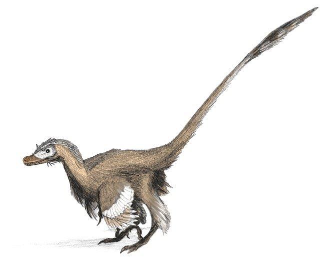Moderní rekonstrukce druhu Velociraptor mongoliensis