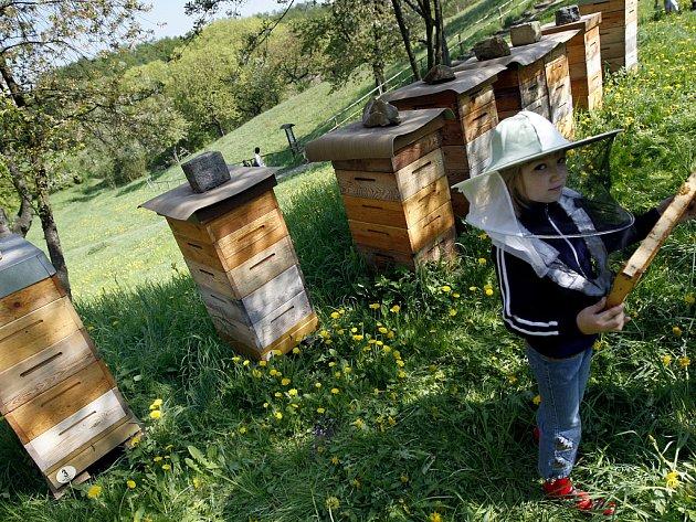 Včelař. Ilustrační snímek.
