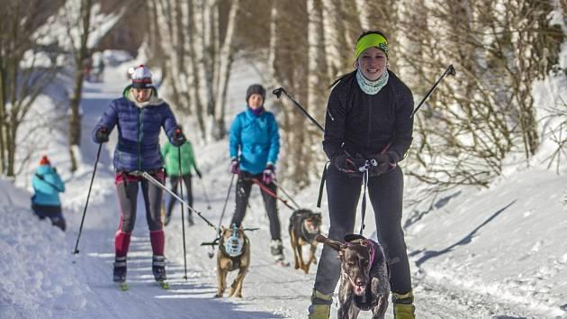 Skijöringový trénink v Rokytnici