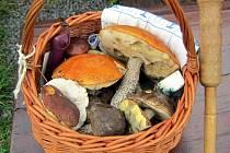 Vycházka hamerských houbařů poslední sobotu v srpnu.