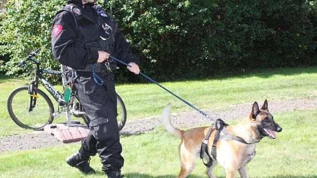 DAR – služební pes Městské policie Turnov se svým psovodem. Zraněný  utekl od zákroku a srazilo auto.