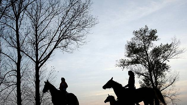 Koně. Ilustrační snímek.