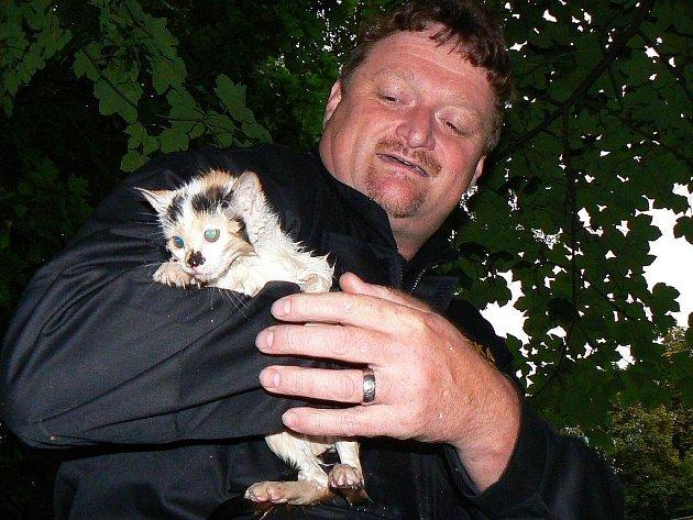 Bezprizorní kotě v náručí městského strážníka Pavla Matouše odchycené v lokalitě jabloneckých lázní.