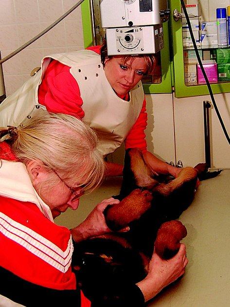 Rentgenový snímek ukáže, jak rozsáhlé zranění fenka měla. K veterináři ji včera přivezly Dagmar Holanová (vpravo) a Dagmar Kubištová.