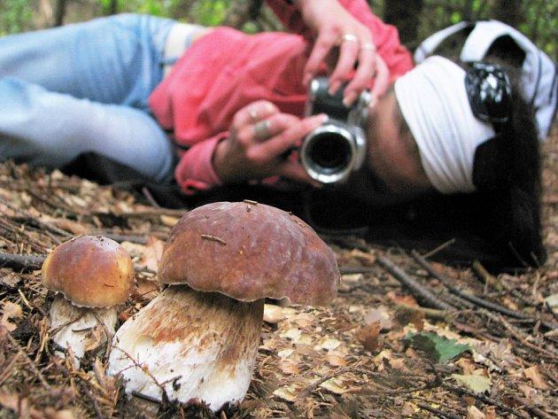 Na houby se vypravte nejen s košíkem, ale i s fotoaparátem.