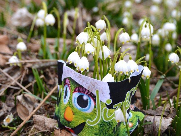 Jaro v úkolí potoku Žernovník na Železnobrodsku. A tisíce bledulí.
