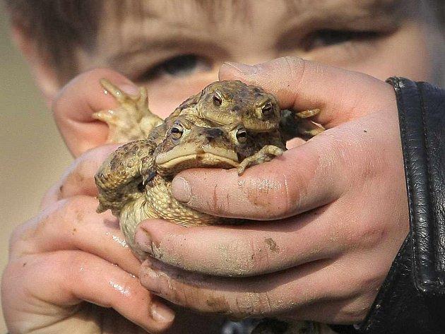 Žáby zachraňují po celé republice