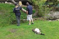 Osm zvířat nepřežilo útok pasteveckého psa