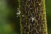 Detail květů žlutokapu v liberecké botanické zahradě