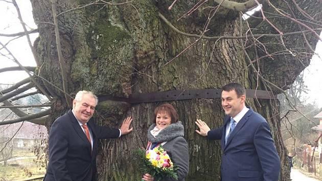 Prezident Miloš Zeman spolu se starostkou Tatobit Lenkou Malou a hejtmanem Libereckého kraje Martinem Půtou u majestátní 650 let staré lípy v obci Tatobity na Semilsku.