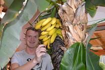 Dvaadvacetiletý student Tomáš Kinský se pyšní úrodou rodiny. V domku na Pěnčíně se rostlinám daří. Banánovníky jim plodily už třikrát, ale tentokrát opravdu nejvíce.