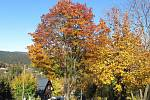Podzim v Jizerských horách v polovině listopadu čaruje. A v Josefově Dole také.