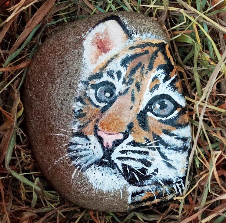 Tygřík Nessie v dražbě do 26. dubna pro libovolnou zoo.