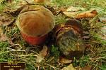 Petr Hampl není mykolog, ale lepší houbař, jak sám říká. Vášeň pro houbaření získal od dědečka už v dětství a vydržela mu dodnes.