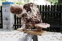 František Brabenec ze Smržovky a jeho léčivé houby