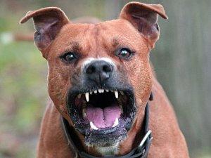 Útok psa. Ilustrační snímek.