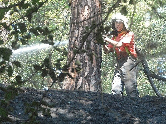 Požár lesního porostu. Ilustrační snímek