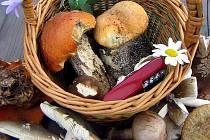 Smyslem pravidelných vycházek hamrovských houbařů není vyrazit v rojnici do hvozdů, nasbírat co nejvíce hřibů, prodat je hospodskému a peníze propít.  Cílem je nasbírat druhově co nejpestřejší sortiment hub, třeba i něco, co se houbám jen vzdáleně podobá.