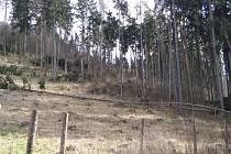 Poškozený les - ilustrační snímek