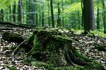 Les. Ilustrační snímek.