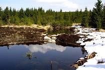 Sanace rašeliny na Černém potoce