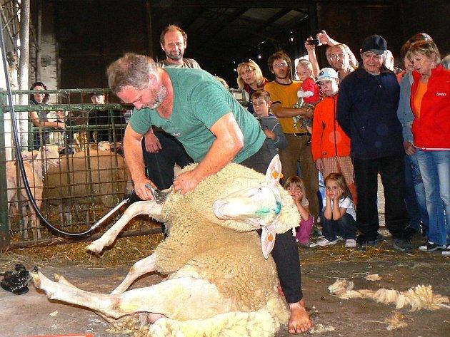 Kozí farma Pěnčín. Svatováclavská výstava ovcí a koz.