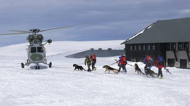 Pátrání záchranářů se psy. Ilustrační snímek.