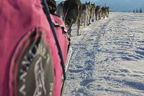 Závod psích spřežení Femundlopet je pro závodníky i psy skutečnou výzvou, protože zde musí vzdorovat nejrůznějším nástrahám místních hor.