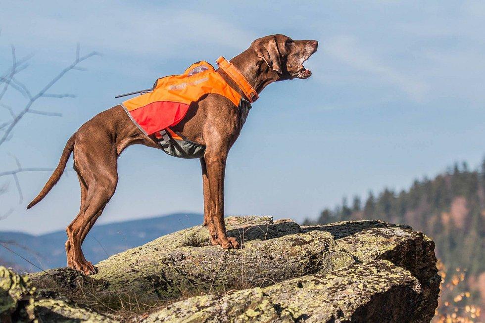 Václav Vančura je profesionální hasič žijící v Tanvaldě. Aktivně se věnuje populárnímu sportu mushing. U Hasičského záchranného sboru Libereckého kraje slouží již 4 rokem. Na snímku jeho první pes Bella.