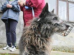 Pes na vodítku. Ilustrační snímek.
