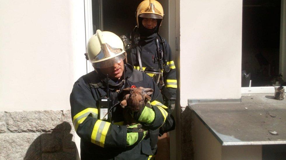 Z hořícího bytu hasiči zachránili kočku a králíka.