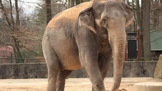 Sexuální videa se slony