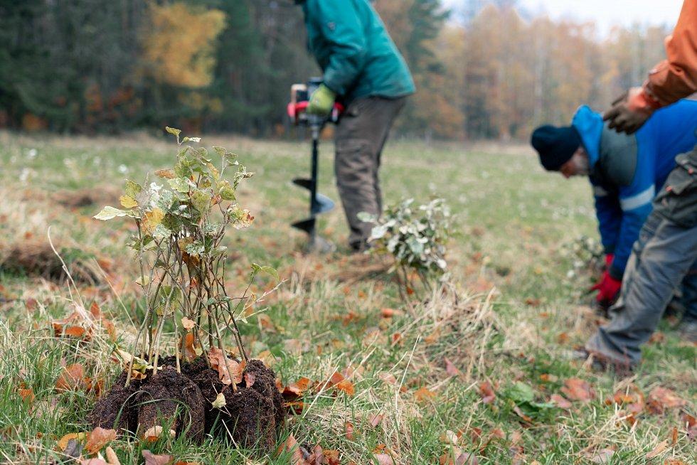 Výsadba druhově rozmanitých lesů na Liberecku.