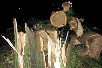 Padlý strom. Ilustrační snímek.