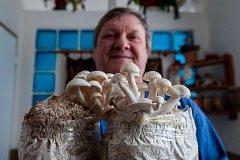 Mykolog František Brabenec ze Smržovky s houbami shimeji.