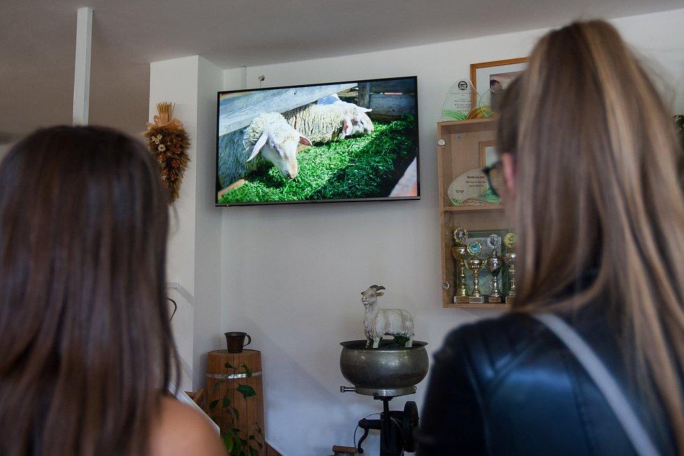 Kozí farma Josefa Pulíčka v Pěnčíně u Jablonce nad Nisou, na které chovají zhruba 1000 koz a 600 ovcí, je největší farmou v republice. Na snímku z 19. července sledují návštěvníci video provázející po celé farmě.