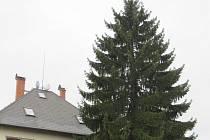 Strom pro Liberec