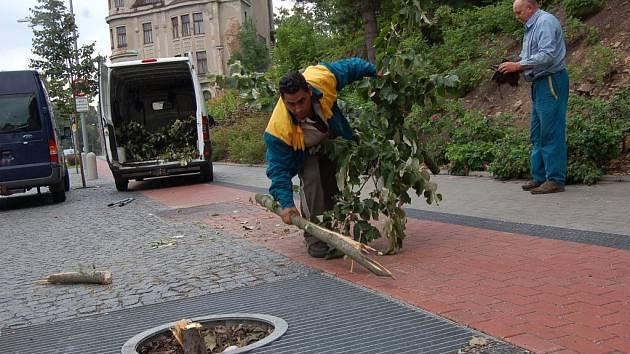 Pracovní ci firmy opravují poničené dřeviny.
