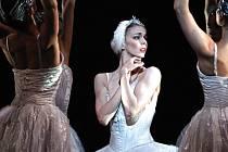 Labutí jezero v podání londýnského Královského baletu