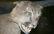 Kriminalisté zkoumají původ preparovaných zvířat, které zabavili při domovní prohlídce v jednom z objektů v Jablonci n. N.