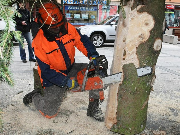 Vánoční strom - čtrnáctimetrový smrk - pro Jablonec již v pondělí padl na soukromé zahradě, aby v poledne zdobil Mírové náměstí před radnicí. Rozsvícen bude v neděli 27. listopadu v 17 hodin. Podobně budou stromy rozsvěceny i v dalších místech.