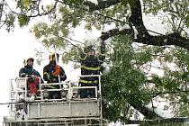 Stále zelené stromy nevydržely masivní nápor sněhu. Jablonecko vypadá, jako by se jím prohnala větrná smršť. Profesionální hasiči z Jablonce v pondělí likvidovali polámané větve v korunách i u Obecního úřadu v Janově.